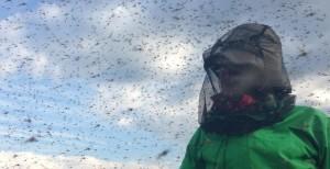 mosquitos- (2)